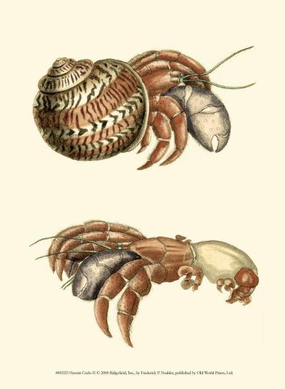 Hermit Crabs II-Frederick P^ Nodder-Art Print