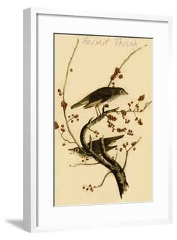 Hermit Thrush-John James Audubon-Framed Art Print