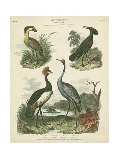 Heron and Crane Species II-Sydenham Teast Edwards-Art Print