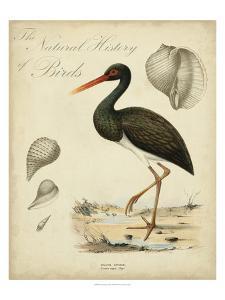 Heron Anthology I