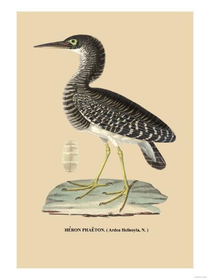 Heron Phaeton--Art Print
