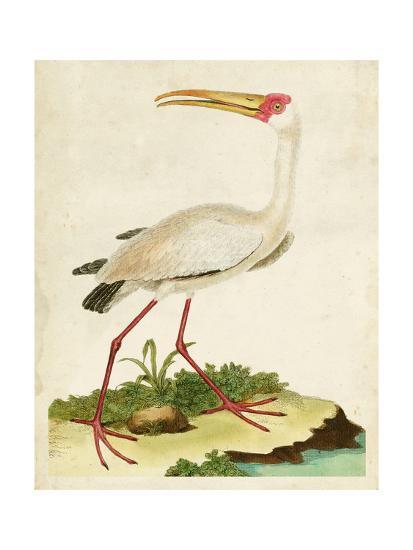 Heron Portrait VII-0 Unknown-Art Print