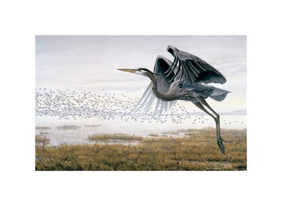 Heron & Sandpipers-Don Li-Leger-Art Print