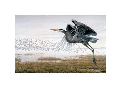 https://imgc.artprintimages.com/img/print/heron-sandpipers_u-l-f5evwk0.jpg?p=0
