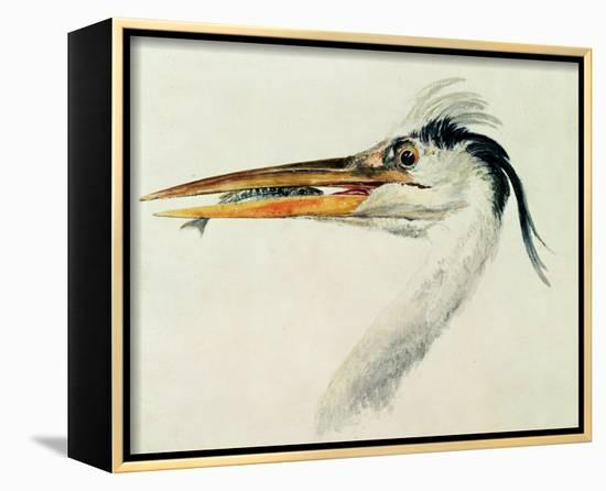 Heron with a Fish-J^ M^ W^ Turner-Framed Canvas Print