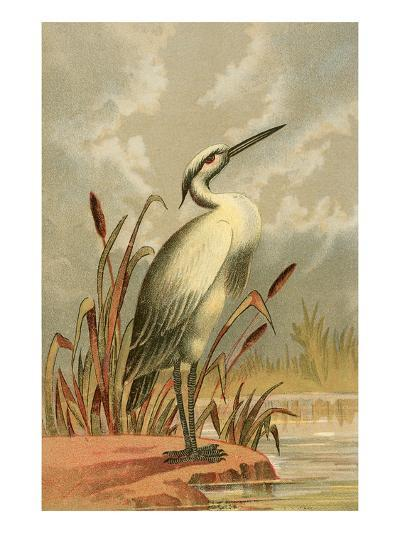 Heron with Cattails--Art Print