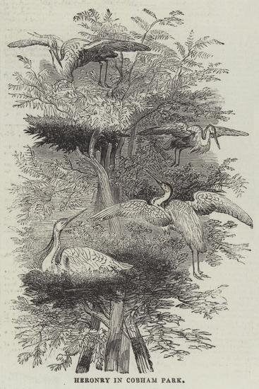 Heronry at Cobham Park--Giclee Print