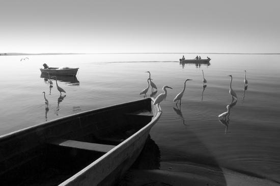Herons and 3 Boats-Moises Levy-Photographic Print
