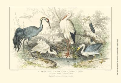 Herons, Egrets & Cranes-Julius Stewart-Art Print