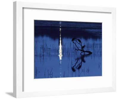 Herons Silhouetted on a Branch in a Chincoteague Marsh-Medford Taylor-Framed Photographic Print