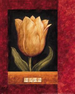 Orange Tulip by Herve Libaud