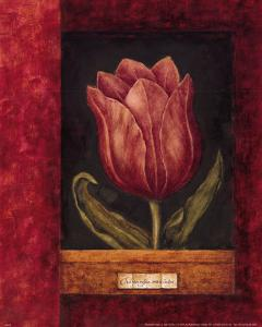 Red Tulip by Herve Libaud