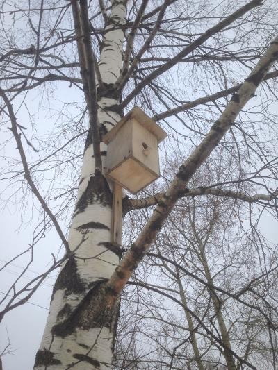Hesting Box- kapralov-Photographic Print