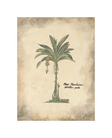 Plantain Palm