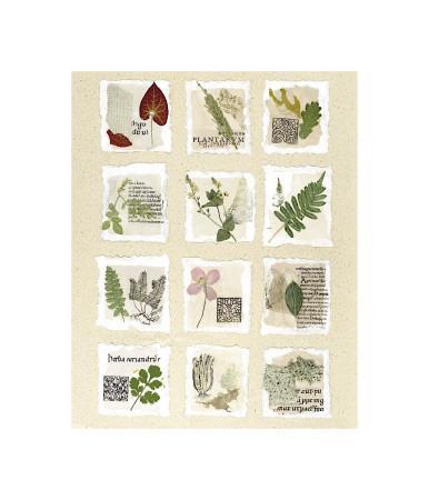 Surrey Garden Fragments