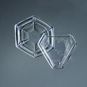 Hexagonal and Triangular Plate Snowflakes