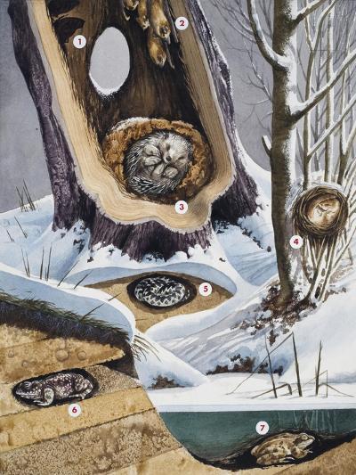 Hibernation--Giclee Print