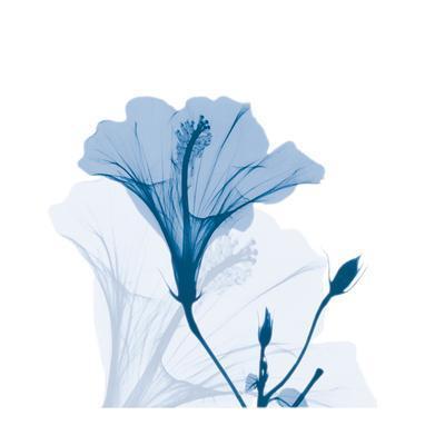 https://imgc.artprintimages.com/img/print/hibiscus-chiller_u-l-f8iwvi0.jpg?p=0
