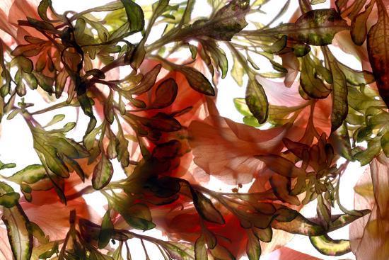 Hibiscus Coleus Array, 2009-Julia McLemore-Photographic Print