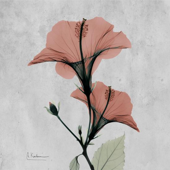 Hibiscus Marsala-Albert Koetsier-Premium Giclee Print