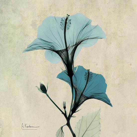 Hibiscus Moment-Albert Koetsier-Premium Giclee Print