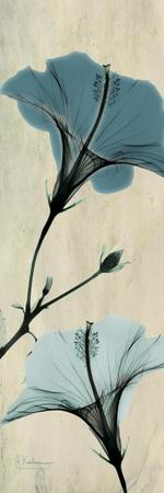 https://imgc.artprintimages.com/img/print/hibiscus-moments_u-l-pyjo0n0.jpg?p=0