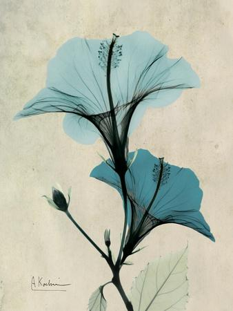 https://imgc.artprintimages.com/img/print/hibiscus-moments_u-l-pyjv3w0.jpg?p=0