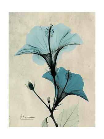 https://imgc.artprintimages.com/img/print/hibiscus-moments_u-l-pyjv4k0.jpg?artPerspective=n