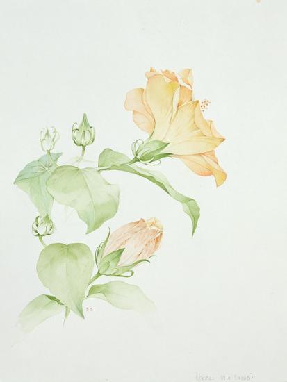 Hibiscus Rosa-Sinensis-Sarah Creswell-Giclee Print