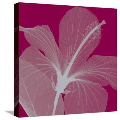 Hibiscus/Silver-Steven N^ Meyers-Stretched Canvas Print