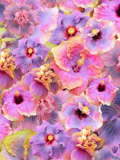 Hibiscus Tropical Floral Flowers 2-Grab My Art-Art Print