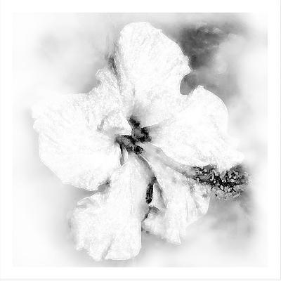 Hibiscus-Maria Trad-Giclee Print