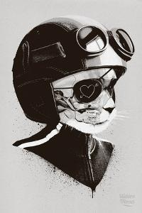 Cat Racer by Hidden Moves