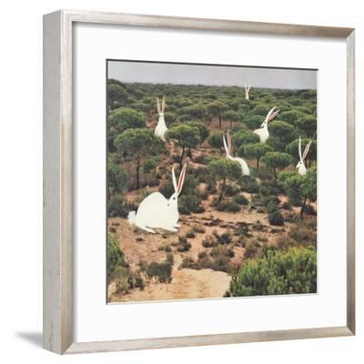 Hide and Peek-Danielle Kroll-Framed Giclee Print