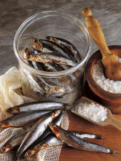 High Angle View of Anchovies in a Jar-P^ Martini-Photographic Print