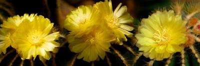 https://imgc.artprintimages.com/img/print/high-angle-view-of-cactus-flowers_u-l-pwf91j0.jpg?p=0