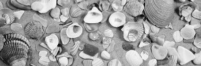 High Angle View of Seashells--Photographic Print