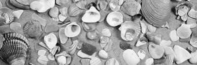 High Angle View of Seashells