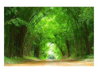 High Bamboo Lined Clay Alley--Art Print