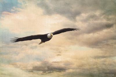 High Flyer Bald Eagle-Jai Johnson-Giclee Print