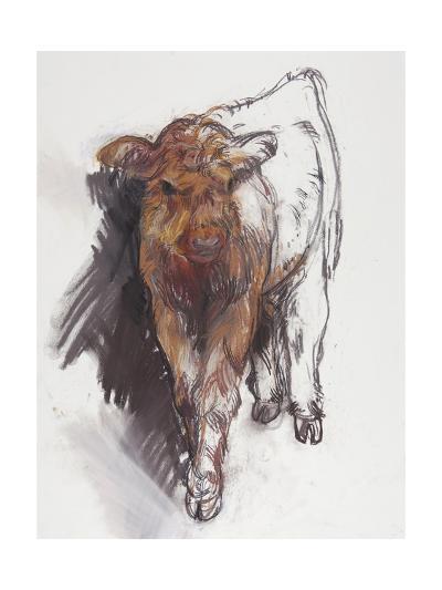 Highland Calf, 2008-Lara Scouller-Giclee Print