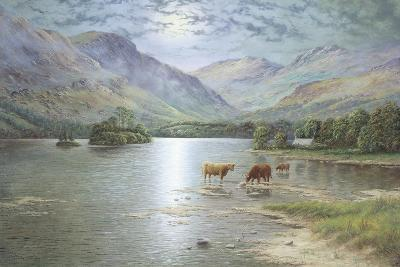 Highland Cattle-Spencer Coleman-Giclee Print