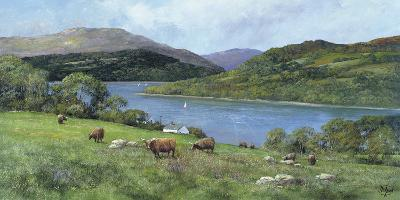 Highland Cattle-Clive Madgwick-Giclee Print