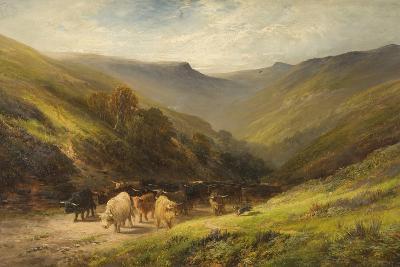 Highland Cattle--Giclee Print