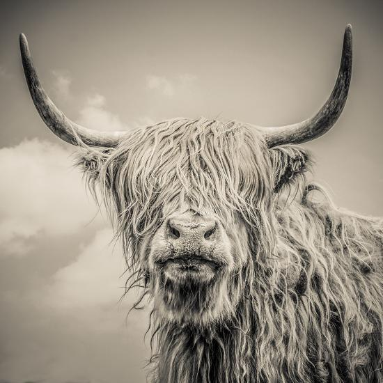 Highland Cattle-Mark Gemmell-Photographic Print