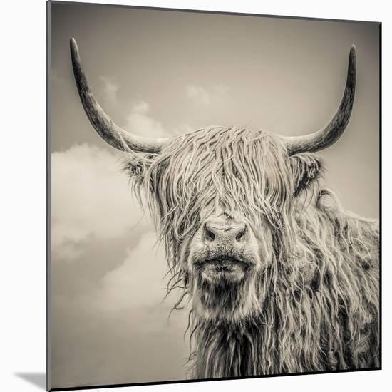 Highland Cattle-Mark Gemmell-Mounted Photographic Print
