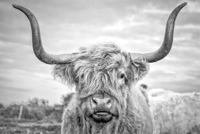 https://imgc.artprintimages.com/img/print/highland-cows-i_u-l-q1ga0w50.jpg?p=0