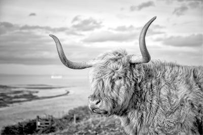 Highland Cows IV-Joe Reynolds-Photographic Print