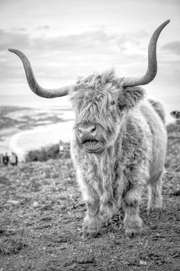 Highland Cows VI-Joe Reynolds-Photographic Print