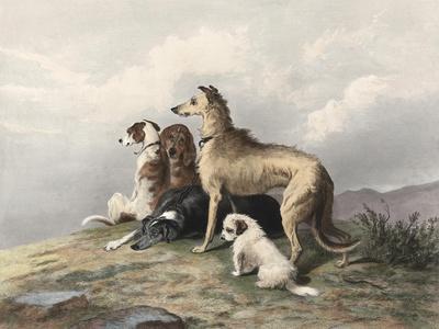 https://imgc.artprintimages.com/img/print/highland-dogs_u-l-pfrbea0.jpg?p=0